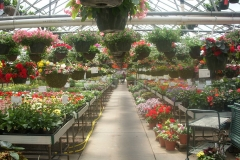 Cernys Greenhouse2